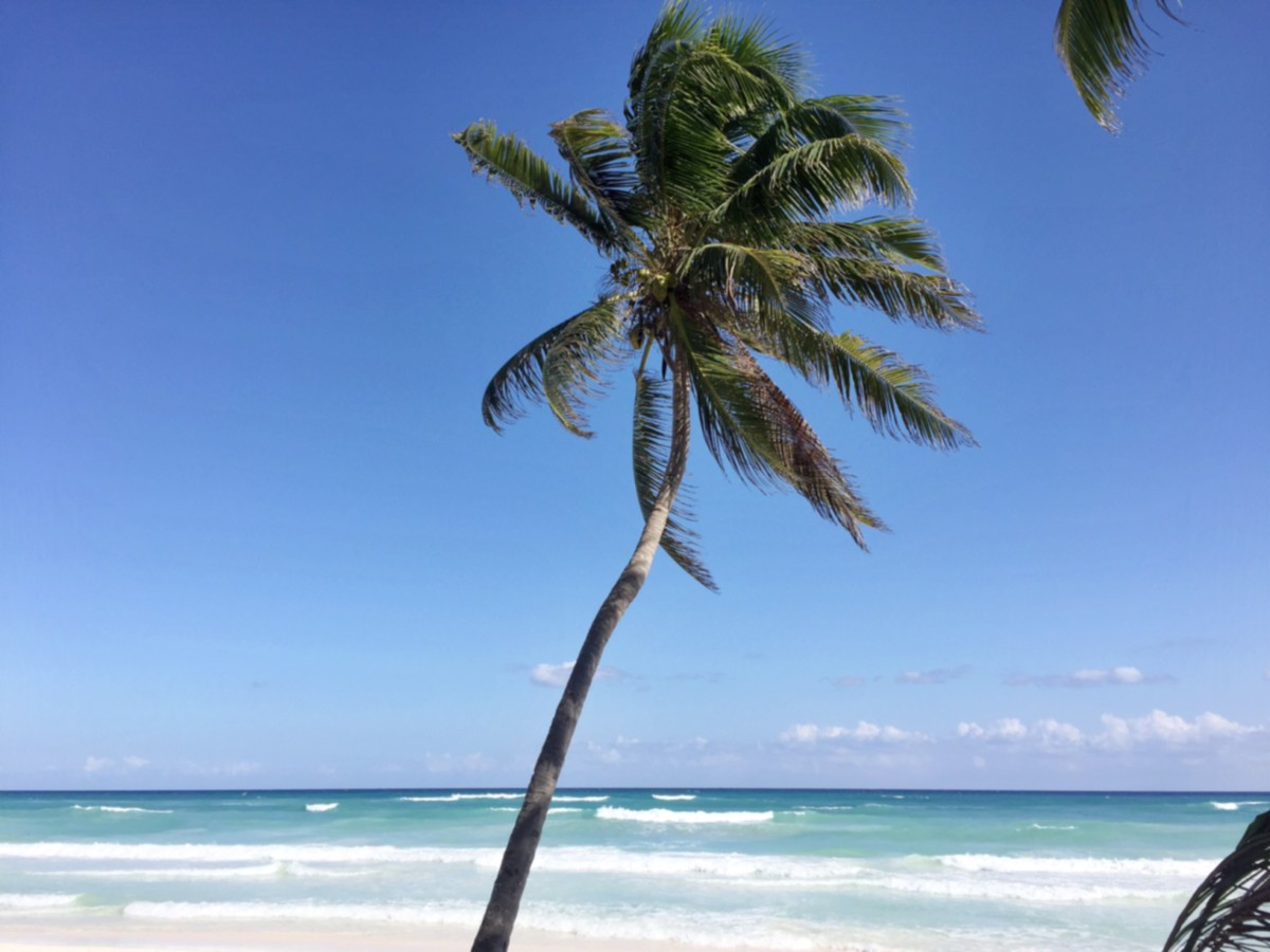 tulum-beach-palm-tree